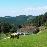 5 Gründe, warum Sie einen Bauernhof kaufen sollten